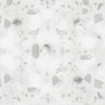 silver-birch-300x300