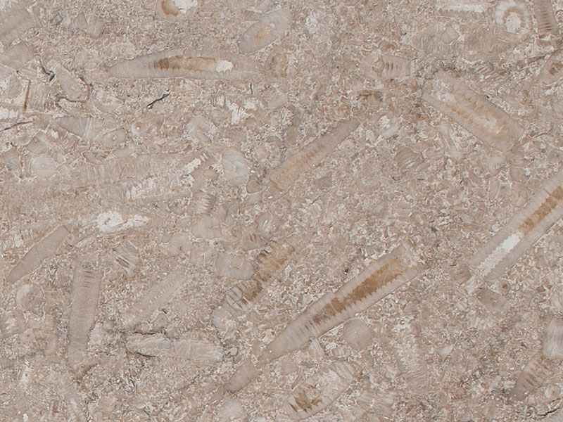 Yorkshire_Fossil_close_up